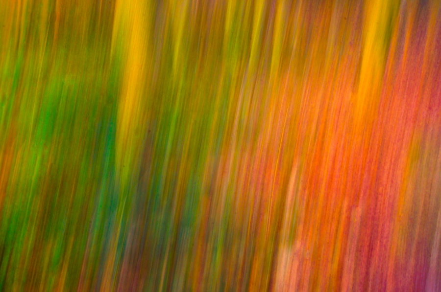 Abstract ICM.png