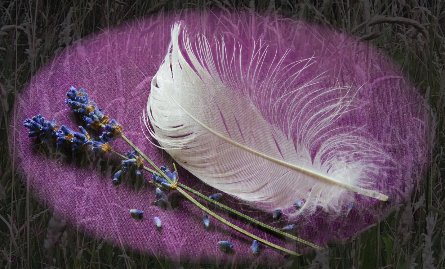 Feather & Lavender & Grass blurred 3-Edit.tif-2.jpg
